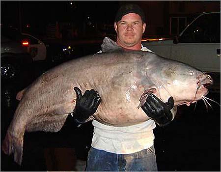 world record catfish in north carolina World Record Blue Catfish Weight
