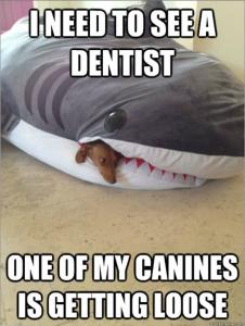 Concerned-Shark