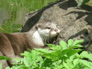 Tina's otter 2